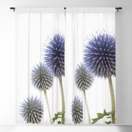 Echinops - Globe Thistles #1 #decor #art #society6 Blackout Curtain