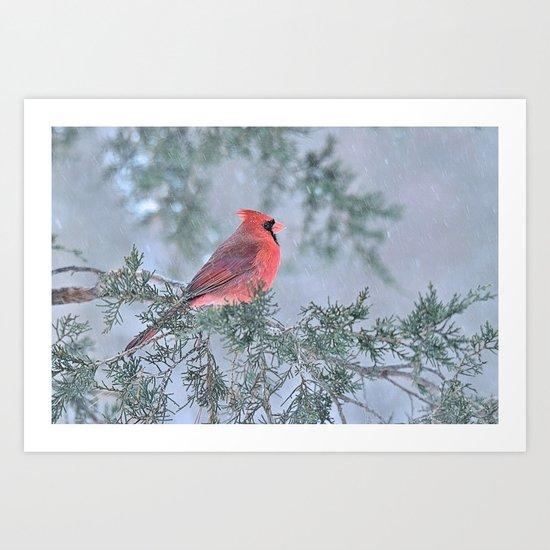 Sleet Cardinal Art Print