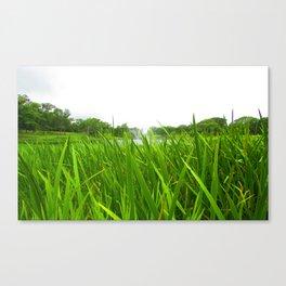 Grass in Focus Canvas Print