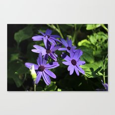 Dark Colours for Bright People Canvas Print