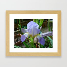 Flying Iris Framed Art Print