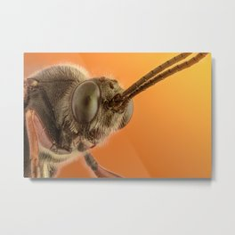 Insect IV Metal Print