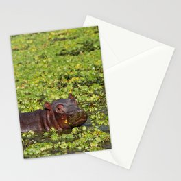 Little Hippo, Africa wildlife Stationery Cards