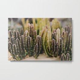 Cactus Fingers Metal Print