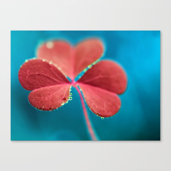 You turn my heart every which way - pink clover macro. Canvas Print