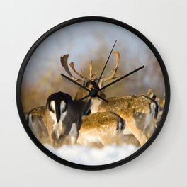 FALLOW DEER ON A WINTERS DAY Wall Clock
