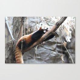 Sleepy Little Panda Canvas Print