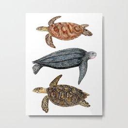 Green, leatherback and hawksbill sea turtles Metal Print