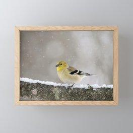Winter Goldfinch Framed Mini Art Print