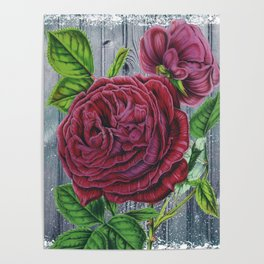 Crimson Rose Grey Winter Fence Collage Poster