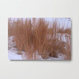 Winter Grasses Metal Print