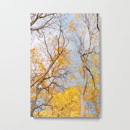 Yellow autumn leaves on trees in park Metal Print