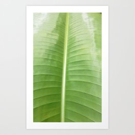 HELICONIA PALM  Art Print
