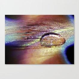 Tear Of A Peacock Canvas Print