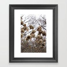 Merryweather Framed Art Print
