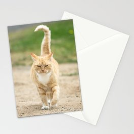 Ginger Cat Walking Stationery Cards