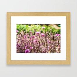 fleurs des champs 5 Framed Art Print