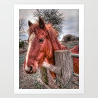 pony Art Prints featuring Pony  by Darren Wilkes Fine Art Images