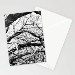 Mangled Tangled Woods. Diamond Head Crater B&W Stationery Cards