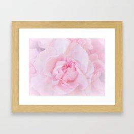 Soft Pink Carnation Framed Art Print