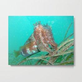 Cuttlefish Sepia sp. Metal Print
