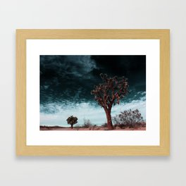 Joshua Tree Madness Framed Art Print