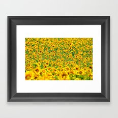 Sunflower 22 Framed Art Print