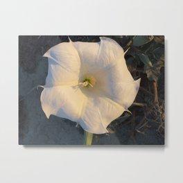 Moonflower Photo Metal Print
