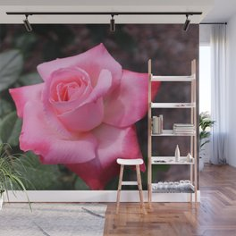 Soft pink rose Wall Mural