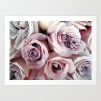 The Palest Roses Art Print