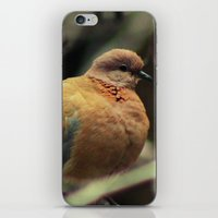 pigeon iPhone & iPod Skins featuring Pigeon by Zura