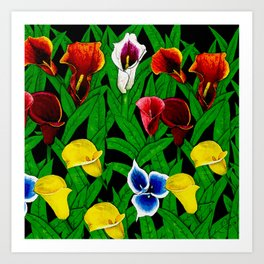 Large Calla Lillies Art Print