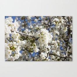 White Blossoms Photography Print Canvas Print