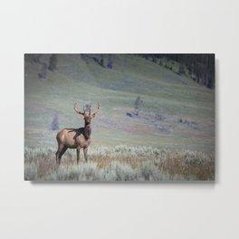 Yellowstone Elk Metal Print