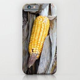 Corn and Corn Husk iPhone Case