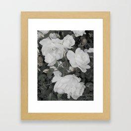 Pale Rose Framed Art Print