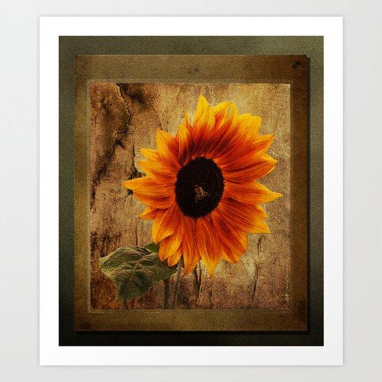 Vintage Sunflower Framed Art Print