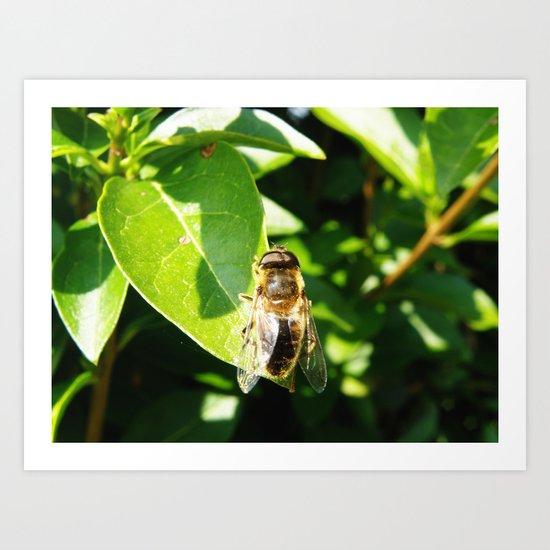 Not a Busy Bee #1 Art Print