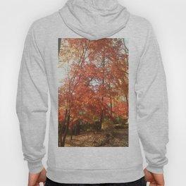 Maplewood - Fall Hoody