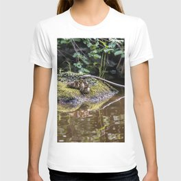 Eight Mallard ducklings T-shirt