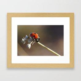 insecte Framed Art Print