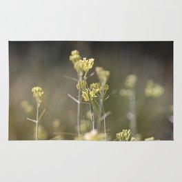 Closeup of Desert Milkweed Sunnyland Estates Rug