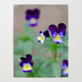 Violas Poster