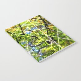 GeoBotanica V2 Notebook
