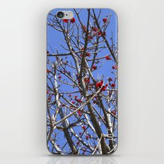 Blossoms On A Barren Tree iPhone & iPod Skin