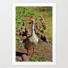 Graylag Goose Art Print