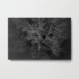 Tasmania Trees From Above Metal Print