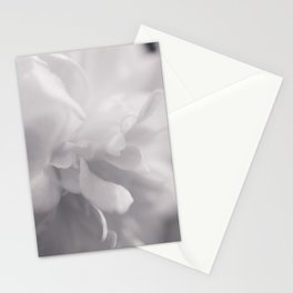Camellia - Flower Photography Stationery Cards