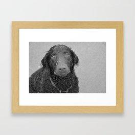 greyscale hound Framed Art Print