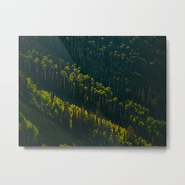 Aerial View OF Green Forest Tall Trees Metal Print